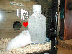 凍ったペットボトルに抱き着くハムスター